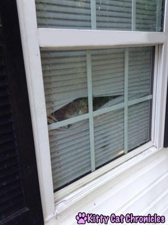 Delilah, Spy Cat