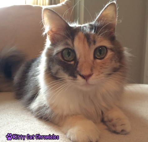 How To Adopt Out A Cat With Fiv