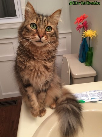 Caster in the Bathroom - Love Languages of Cats