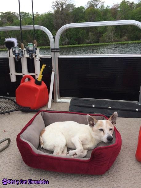 Wordless Wednesday: Welaka, Lucy on a boat