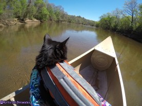 Hiking & Canoeing with Kylo Ren, Adventure Cat