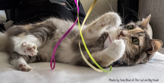 Sophie's BlogPaws Birthday: Testing out Wand Toys