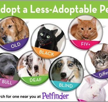 Adopt a Less Adoptable Pet