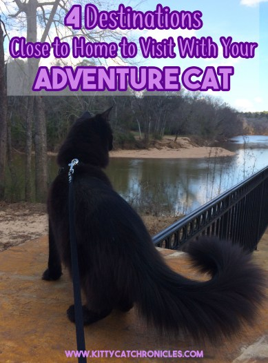 4 Destinations Close to Home to Visit With Your Adventure Cat