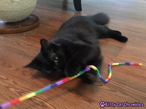 Adventure Cat Travel Guide: Everything You Need! - Cat Toy