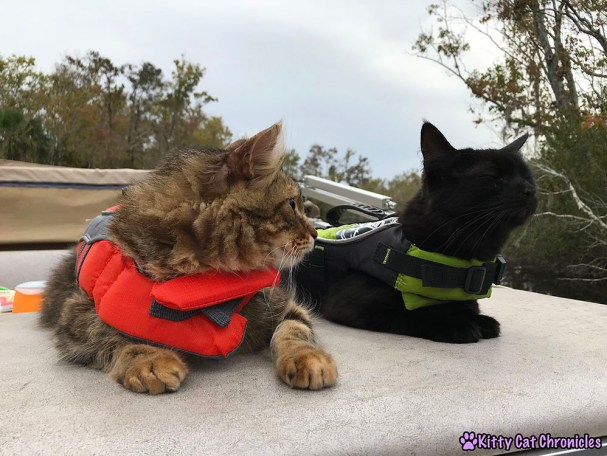 The KCC Adventure Team Tours the St. John's River - Caster and Kylo Ren, cats in life jackets