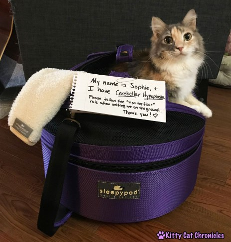 Cerebellar Hypoplasia Cats & Anesthesia: Is it Safe? - Sophie in Sleepypod