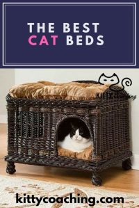 The 5 Best Cat Beds (2018)
