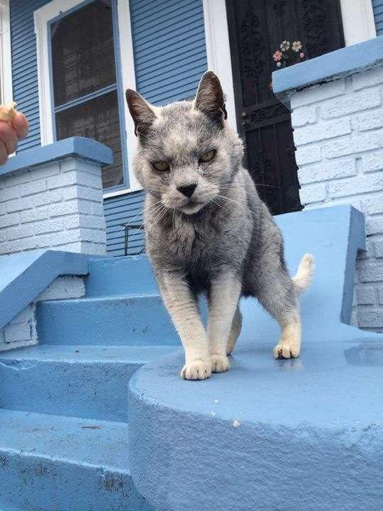 Wolf Cat Kittyworks