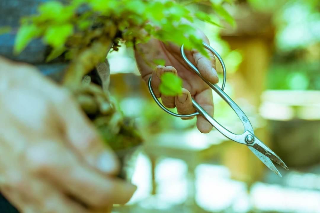 forbici acciaio inox bonsai