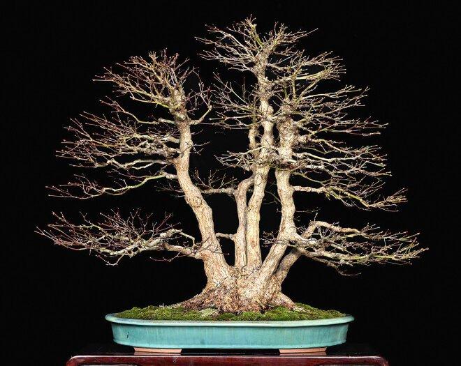 bonsai in veste invernale