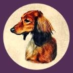 Kiva Dachshunds app icon (144)