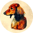 Kiva Dachshunds icon (114)