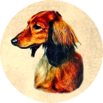Kiva Dachshunds icon (192)