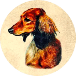 Kiva Dachshunds icon (76)