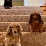 Past Pups 10