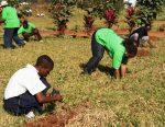 stadi za maisha kwa vijana na watoto -Kupanda miti