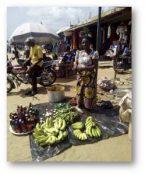 Um experimento em doação: Parte II - kiwanja.net 6