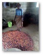 Um experimento em doação: Parte II - kiwanja.net 8
