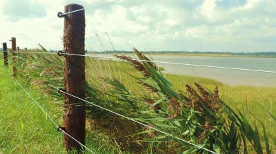 commercial-agricultural-fencing-008
