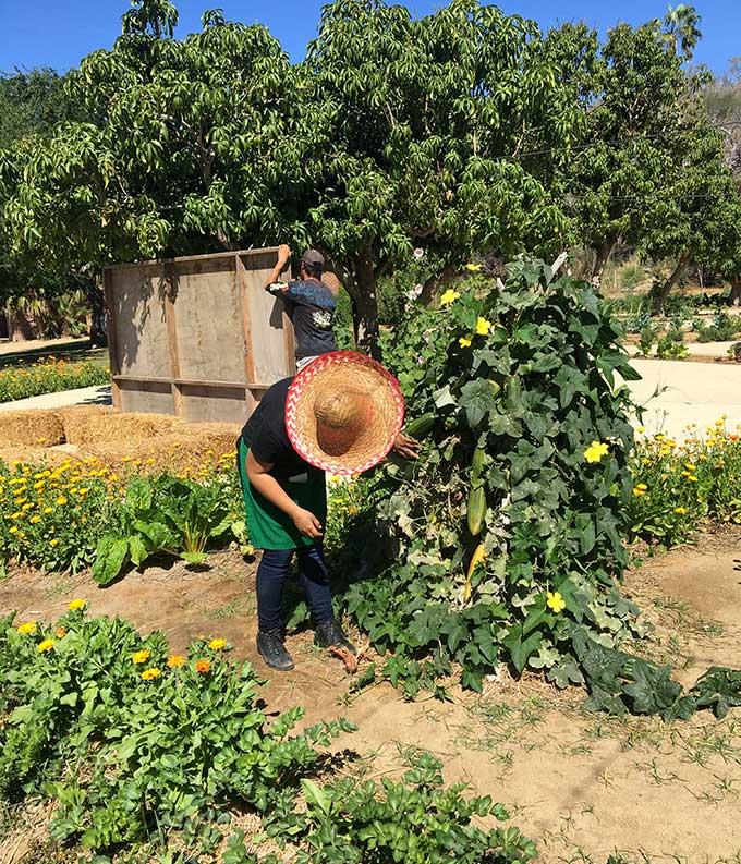 Al Fresco Cooking at Flora Farms