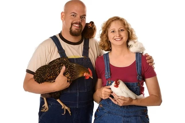 How to choose a pet that suits your family - Chickens