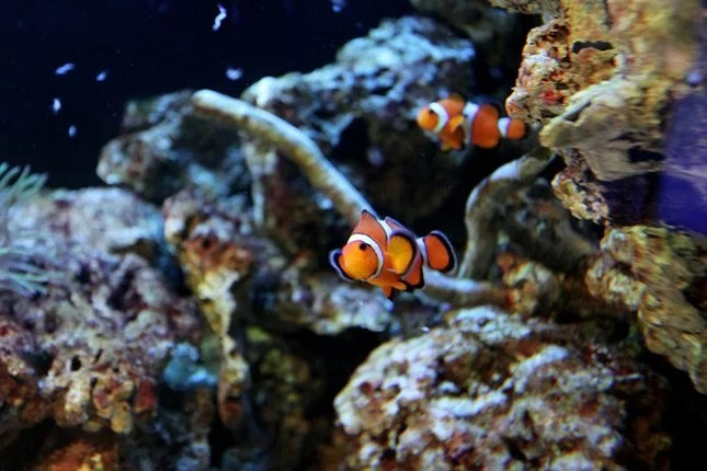 How to choose a pet that suits your family - Fish