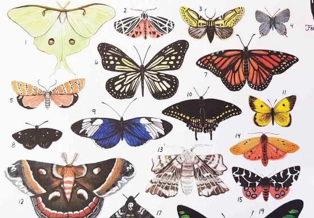 butterfly project butterfly page