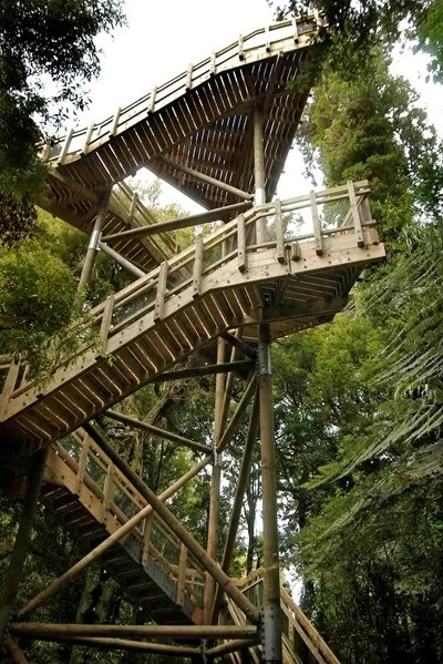 Canopy Tower Maungatautari