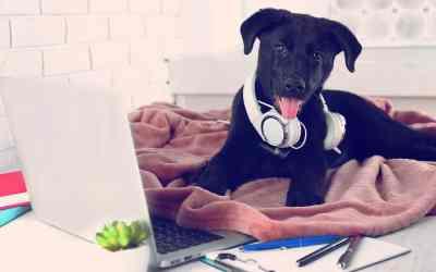 Vous aimez travailler avec votre chien ou chat ? Alors emmenez-les au bureau avec vous !