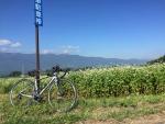 富士見パノラマと蕎麦の花