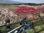 花桃とDEFY 1