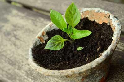 Gjødsel - 5 naturlige alternativer som får plantene til å trives