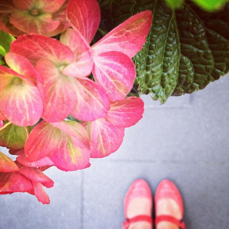 hortensie și pantofi roșii