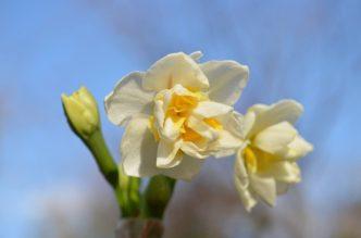 冬の空と白い花