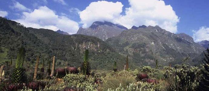 uganda national parks mount rwenzori national park
