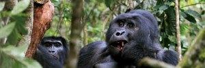 3 Days Gorilla Trekking Rwanda Safaris