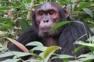 Long Adventure Safaris Across Uganda and Rwanda