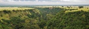 Queen Elizabeth National Park Wildlife Safari and Chimpanzee Tracking