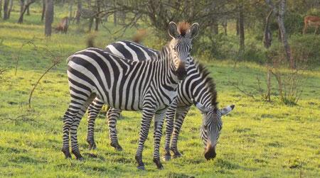 14 Days Discovering Uganda Safaris