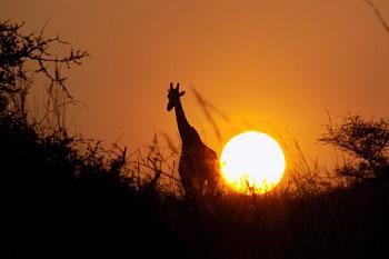 African Murchison Falls Sun Rise View