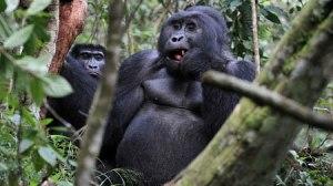 Luxury Gorilla Trekking Safaris Rwanda