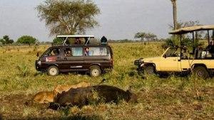 Pure Kidepo & Murchison Falls Safaris