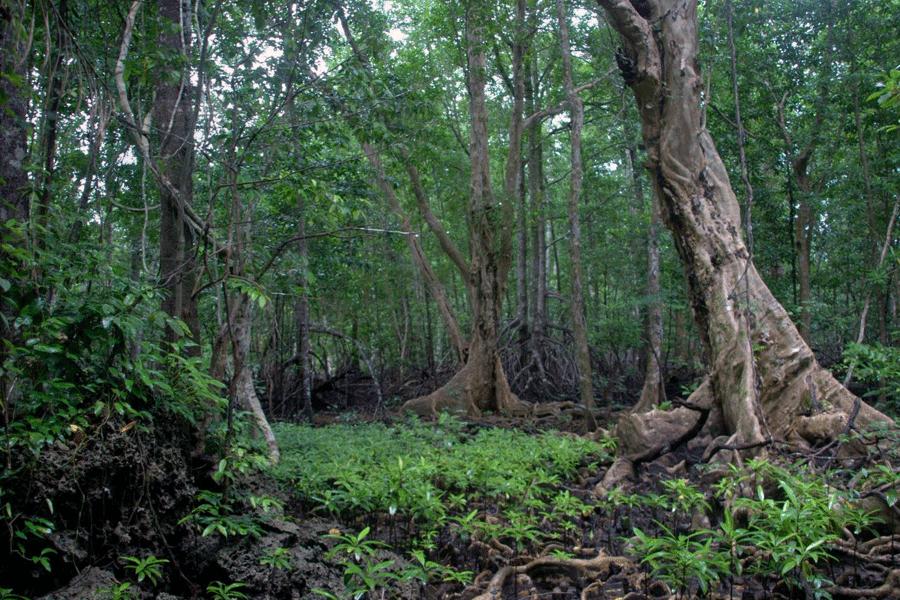 460 Ribu Hektar Hutan Berubah Jadi Lahan Terlantar