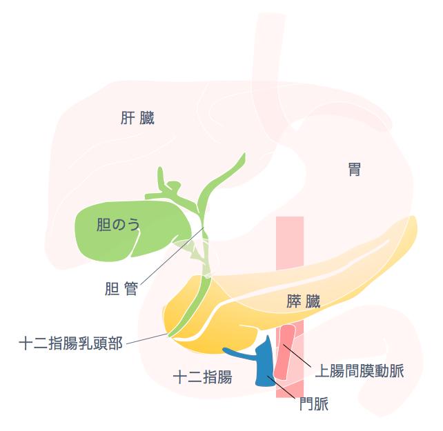 慢性膵炎 | 広島記念病院