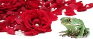 rose_toad3