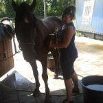 klantmassage met klankschaal voor paard