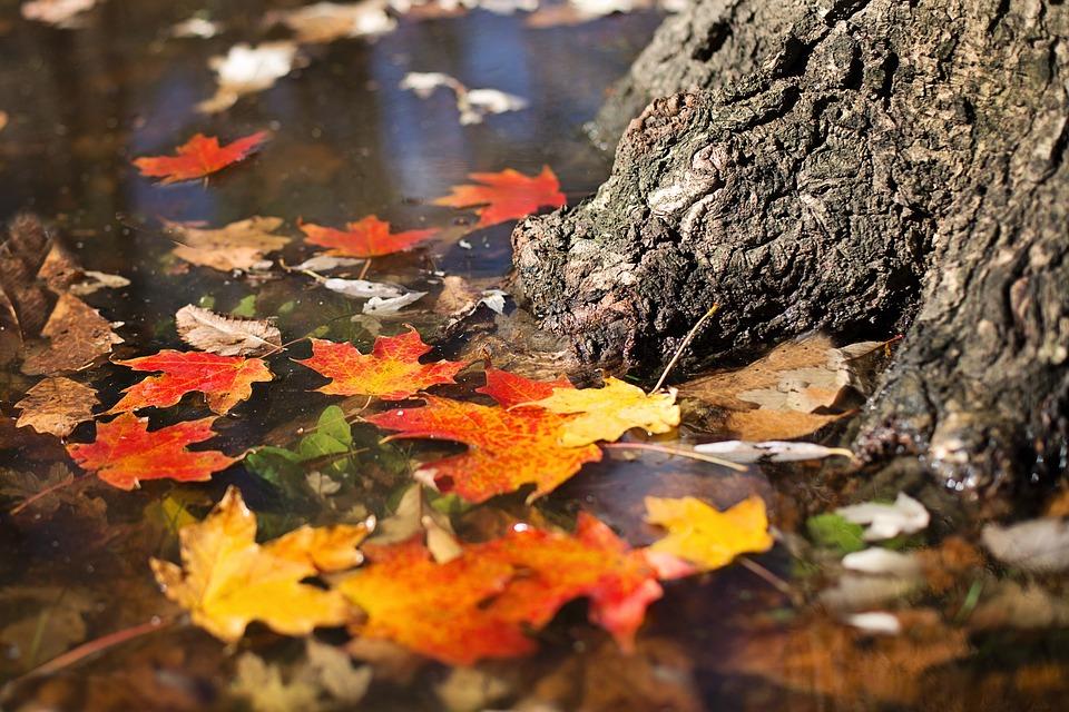 Fall Pumpkins Desktop Wallpaper Patronen Verderzetten De Herfst Downloadbaar