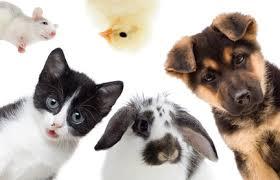 pets improve life quality