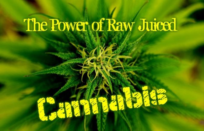 juicing cannabis leaves
